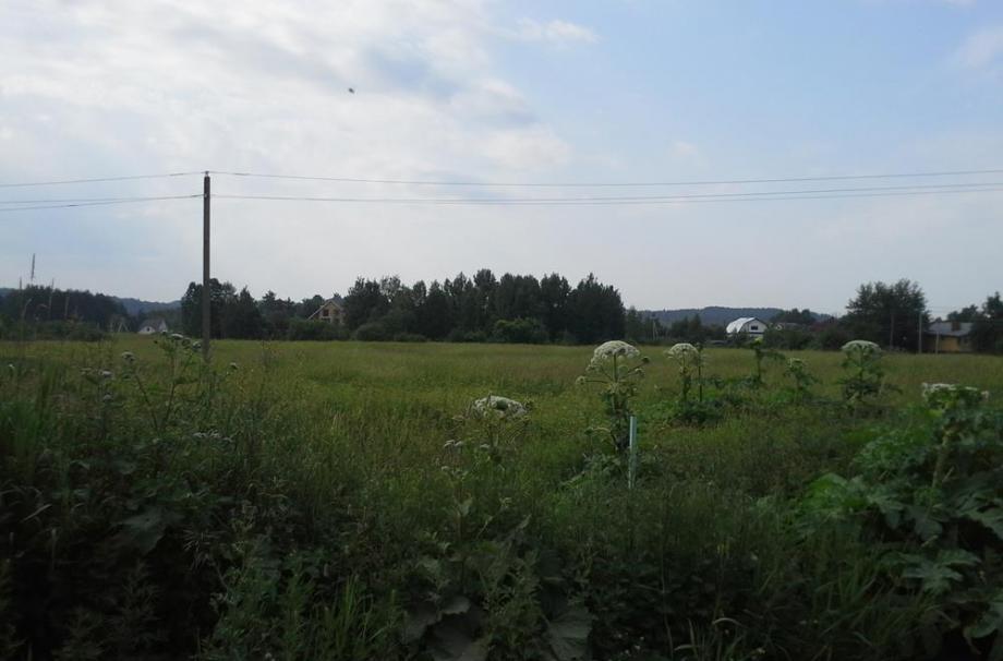 Нева 2003