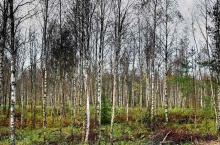 Лес-поле