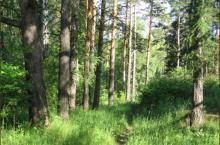 Сосновый рай