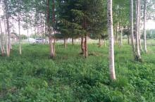СНТ Ручеек (садоводческий массив Рынделево)