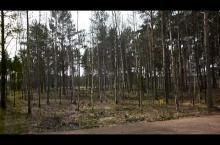 Embedded thumbnail for Коттеджный поселок «Охтинский парк»
