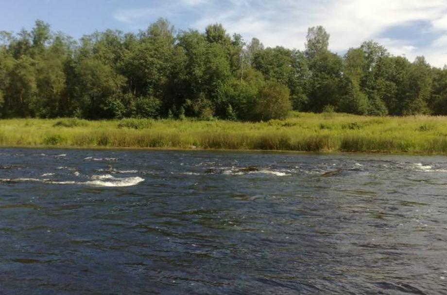 Луга-река