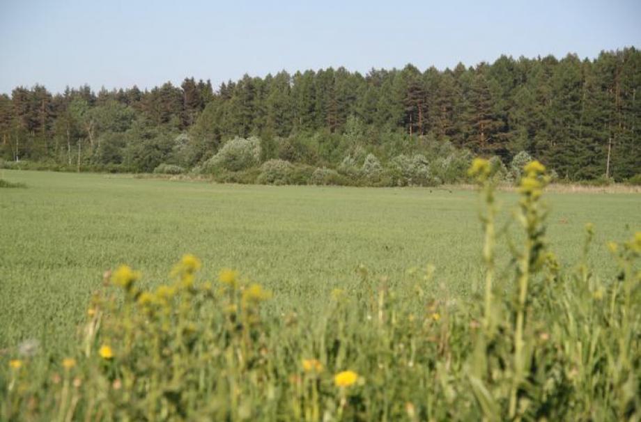 Лесной Уют