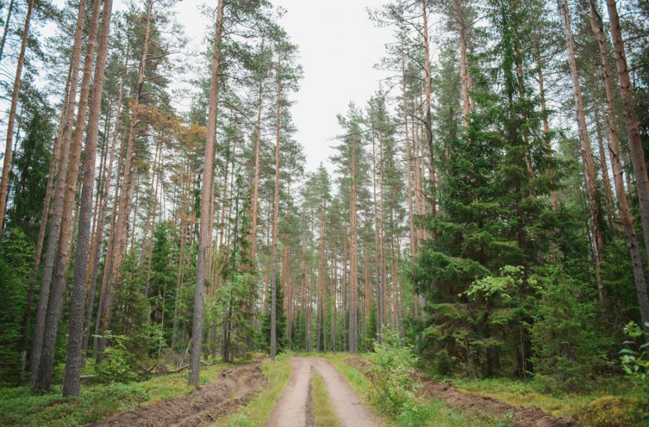 карельский лес ленинградская область природа участки