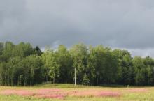 Лесной участок 120 соток у дер. Никольское